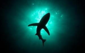 Акулы интервью